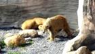 Eisbären im Zoo in Bremerhaven