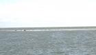 Robben auf einer Sandbank in der Nordsee