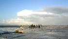 Eisschollen auf dem Jadebusen sind immer ein Erlebnis aber auch nicht frei von Gefahren